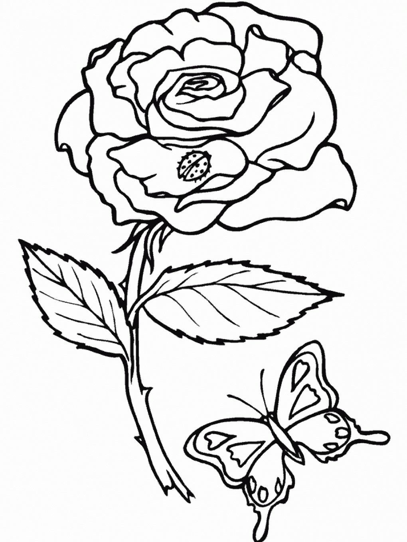 Раскраска Роза и бабочка