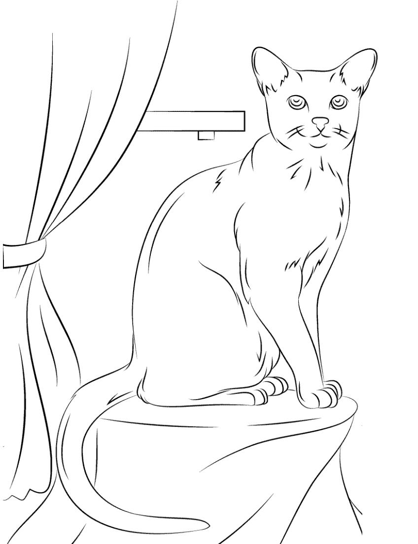 Раскраска Кошка сидит на столе