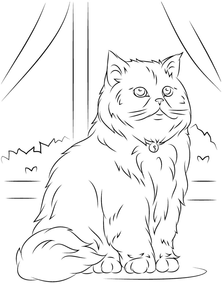 Раскраска Арабская кошка
