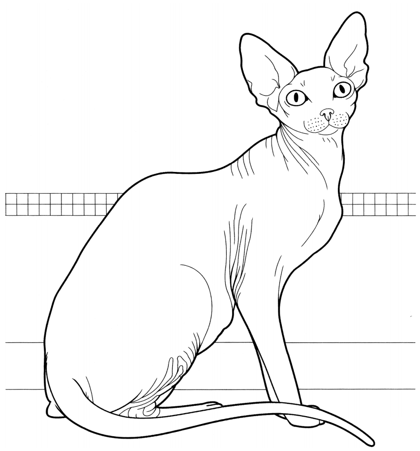 Раскраска Сфинкс кот