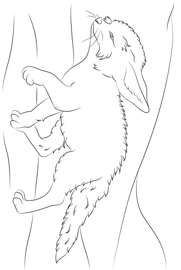 Раскраска Лиса породы фенек