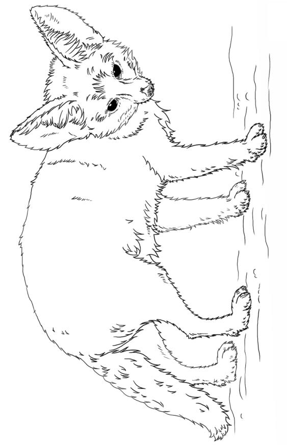 Раскраска Лиса породы феннек