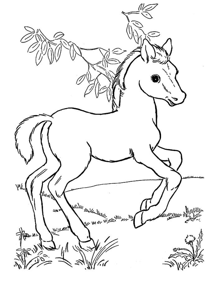 Раскраска маленькая лошадь