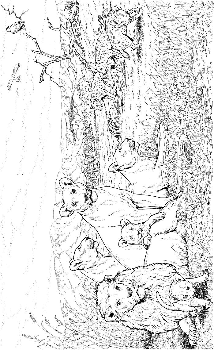 Раскраска Стая львов