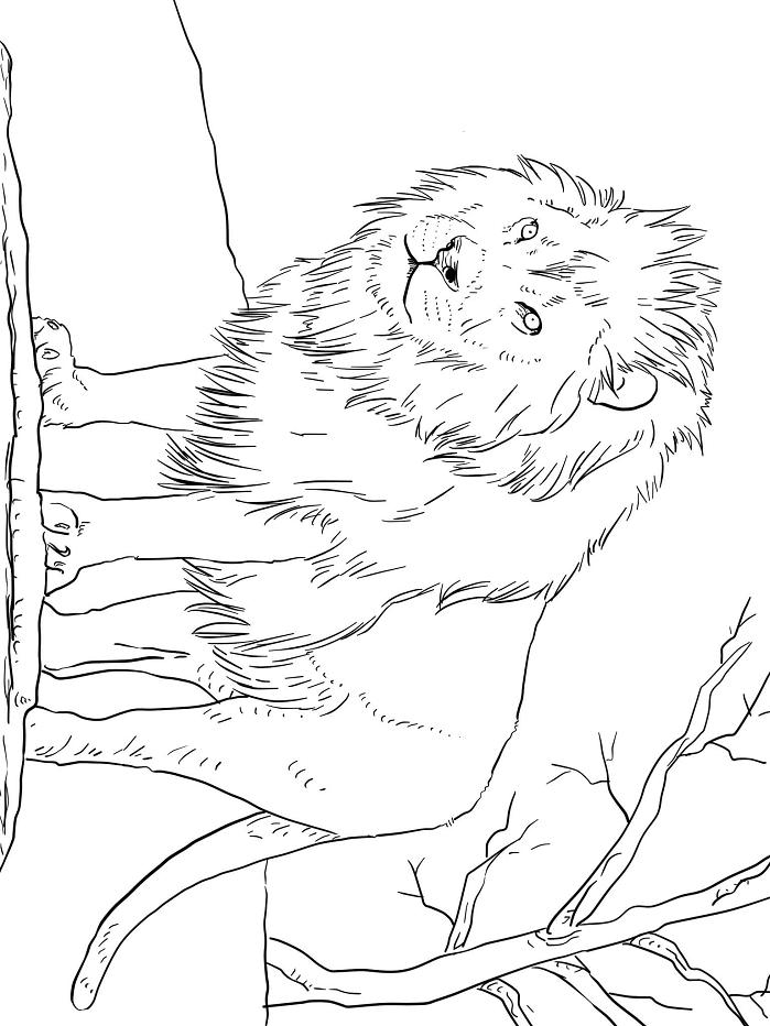 Раскраска Величественный лев