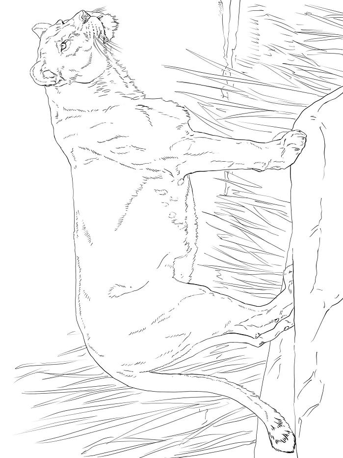 Раскраска Смотря львица