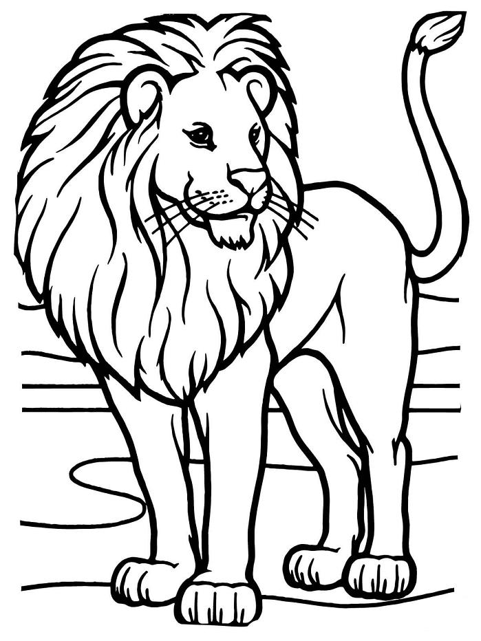 Раскраска Раскраски Лев