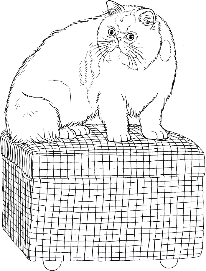 Раскраска Персидская кошка на османской