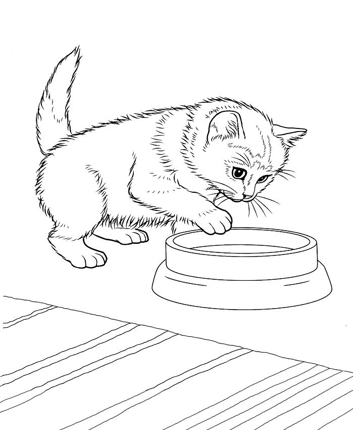 Раскраска Котенок и миска с едой