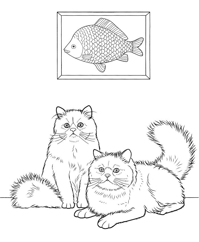 Раскраска Две Гималайская кошки