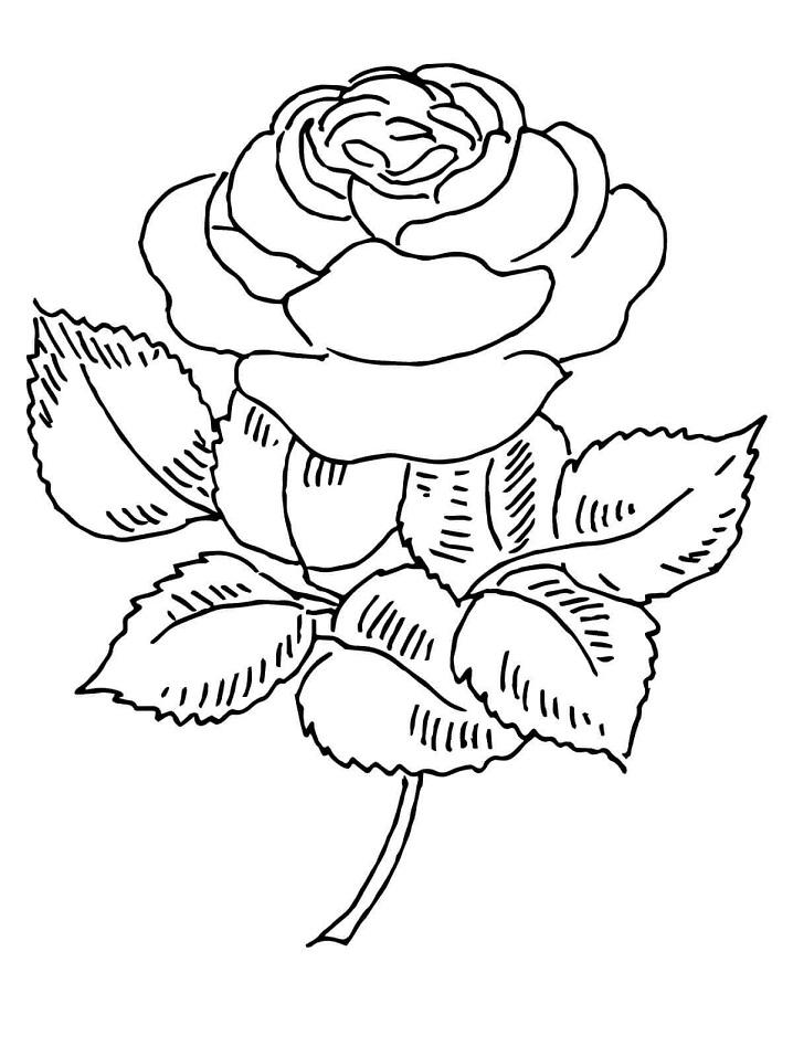 Раскраска Прекрасная роза