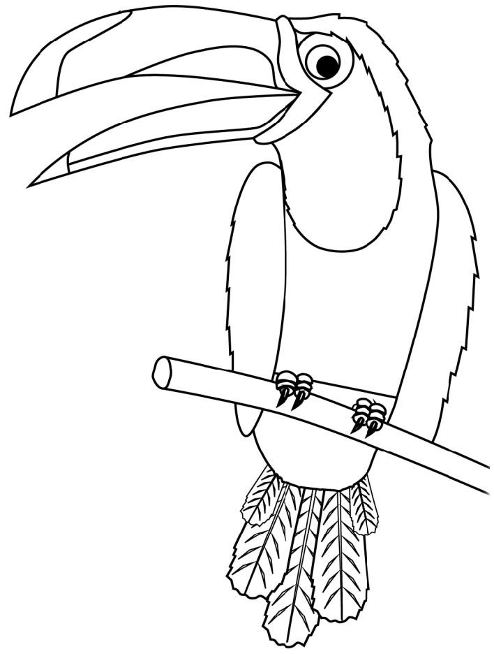 Раскраска Тукан на ветке