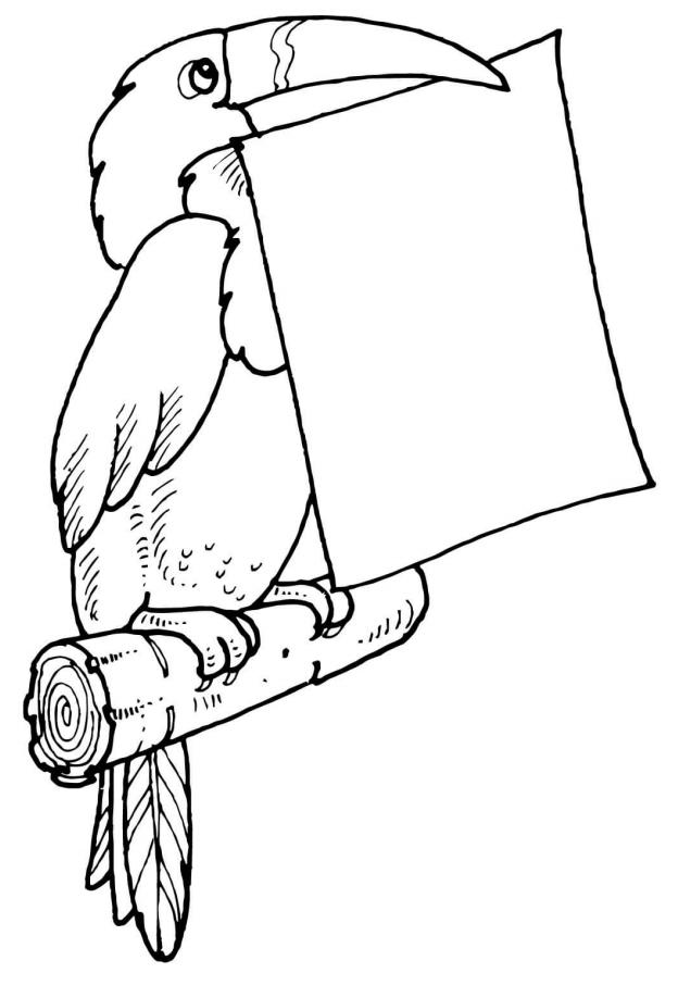 Раскраска Тукан сохранил письмо