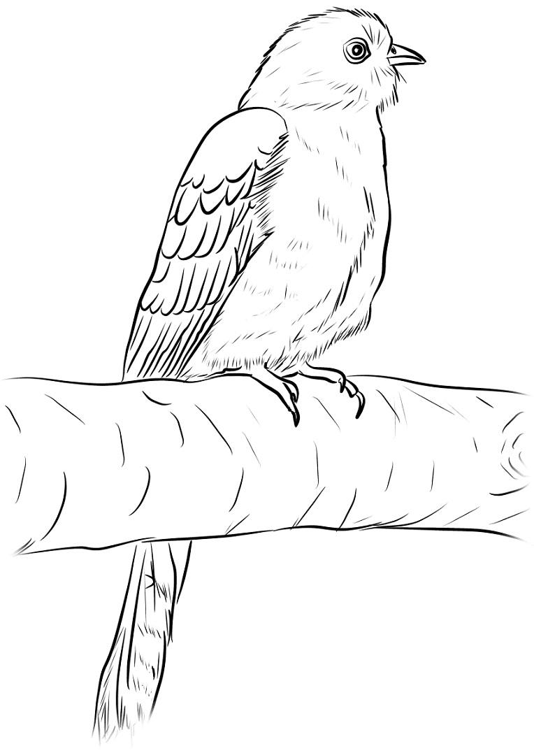 Раскраска Обыкновенная кукушка