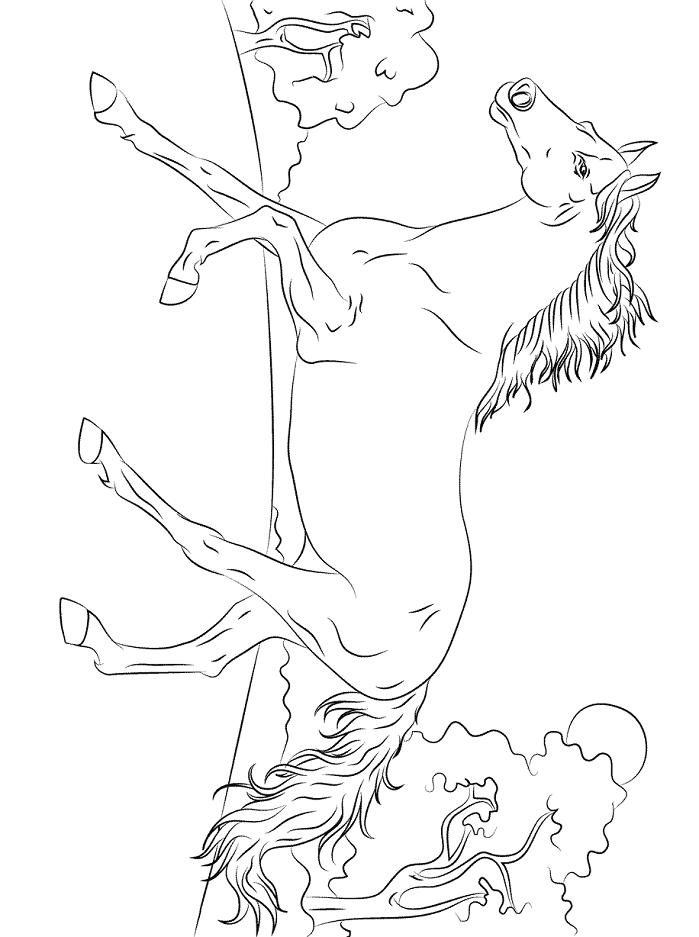 Раскраска Арабская чистокровная лошадь