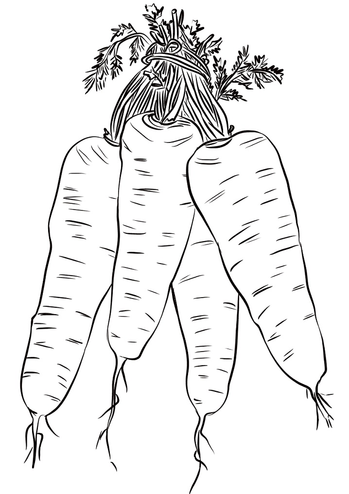 Раскраска Четыре морковки