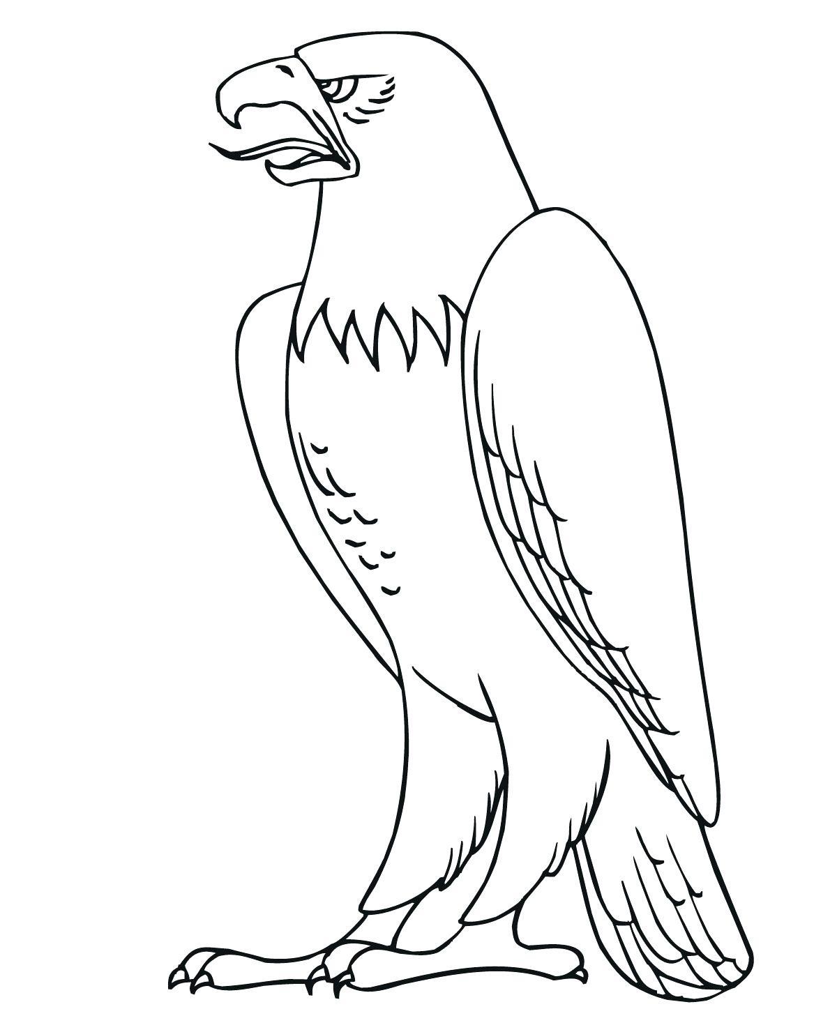 Раскраска сильный орел