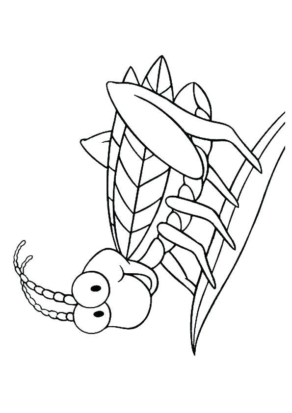Раскраска Кузнечик на листе