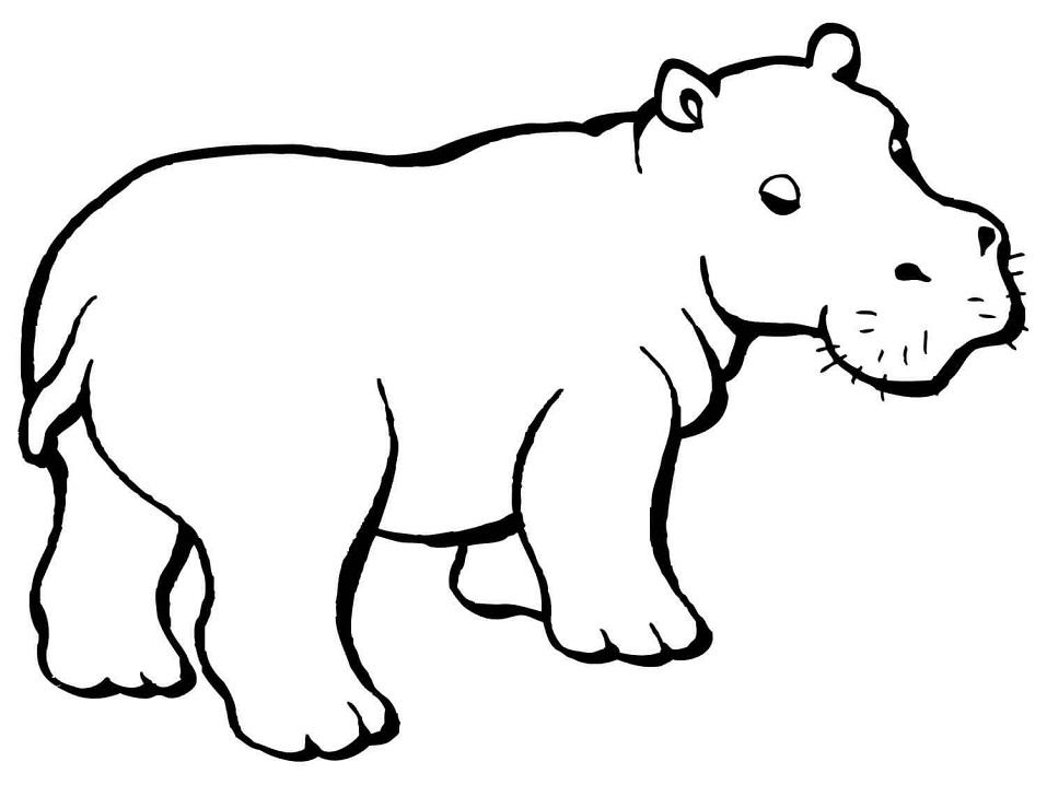Раскраска Детёныш бегемота