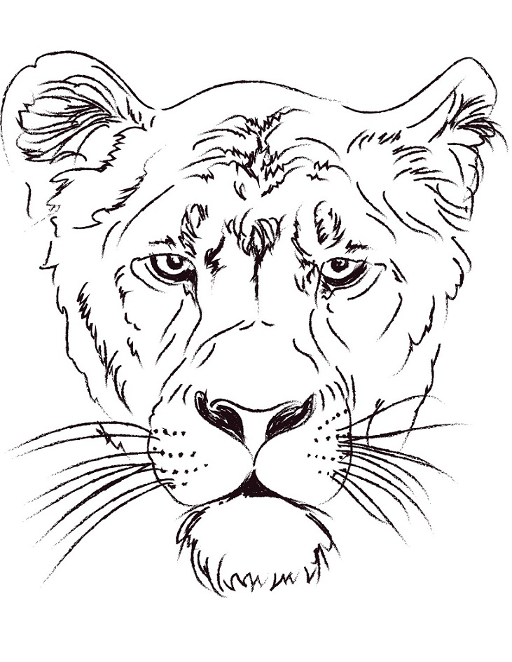 Раскраска Голова львицы