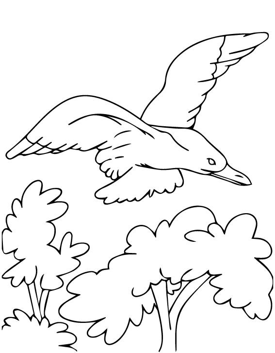 Раскраска Кортезская чайка