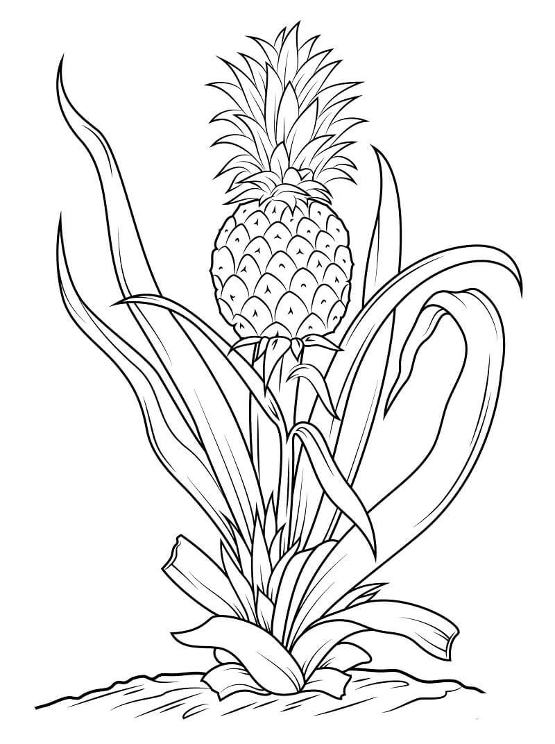 Раскраска ананас 5