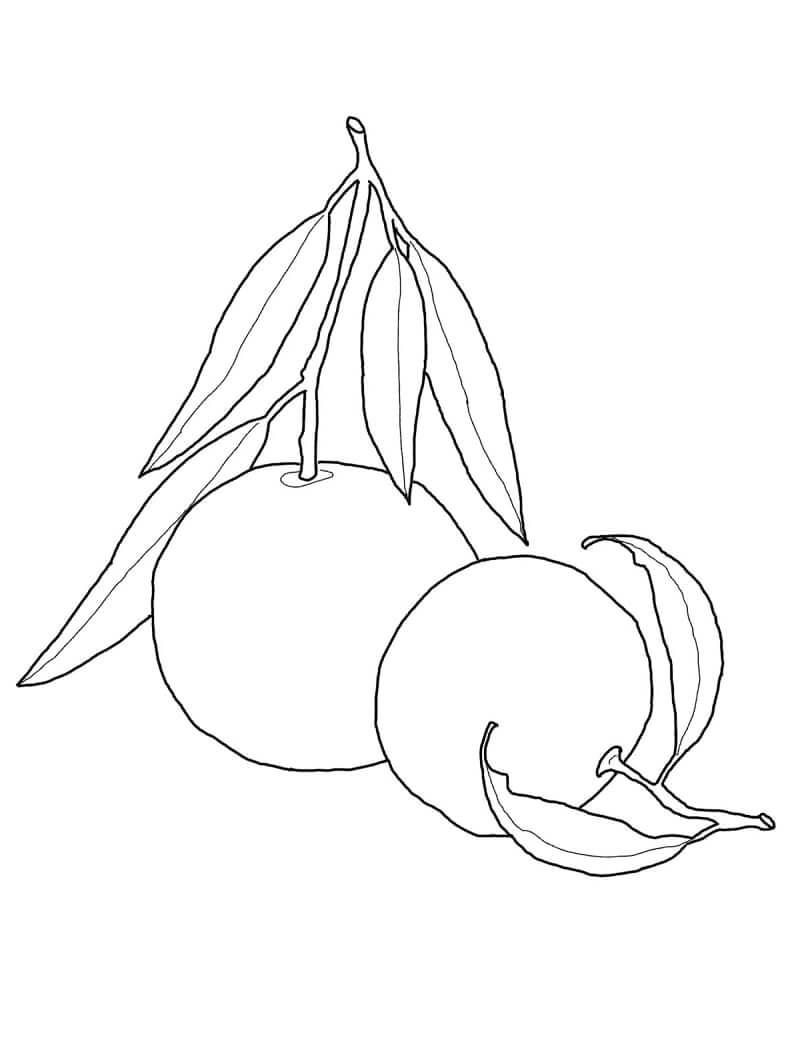 Раскраска Апельсины фрукты 1
