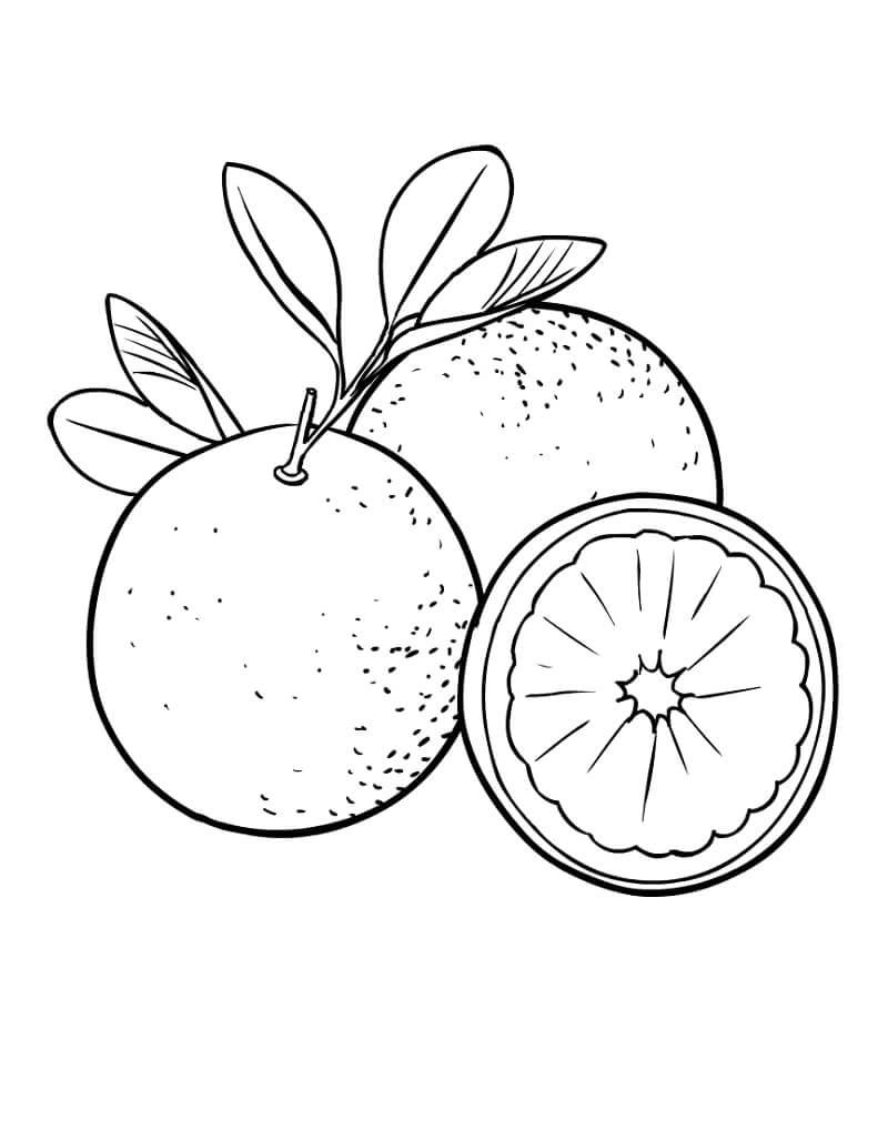 Раскраска Апельсины фрукты 2