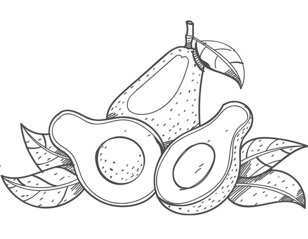 Раскраска Авокадо 10