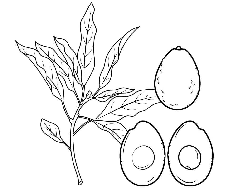 Раскраска Авокадо 17