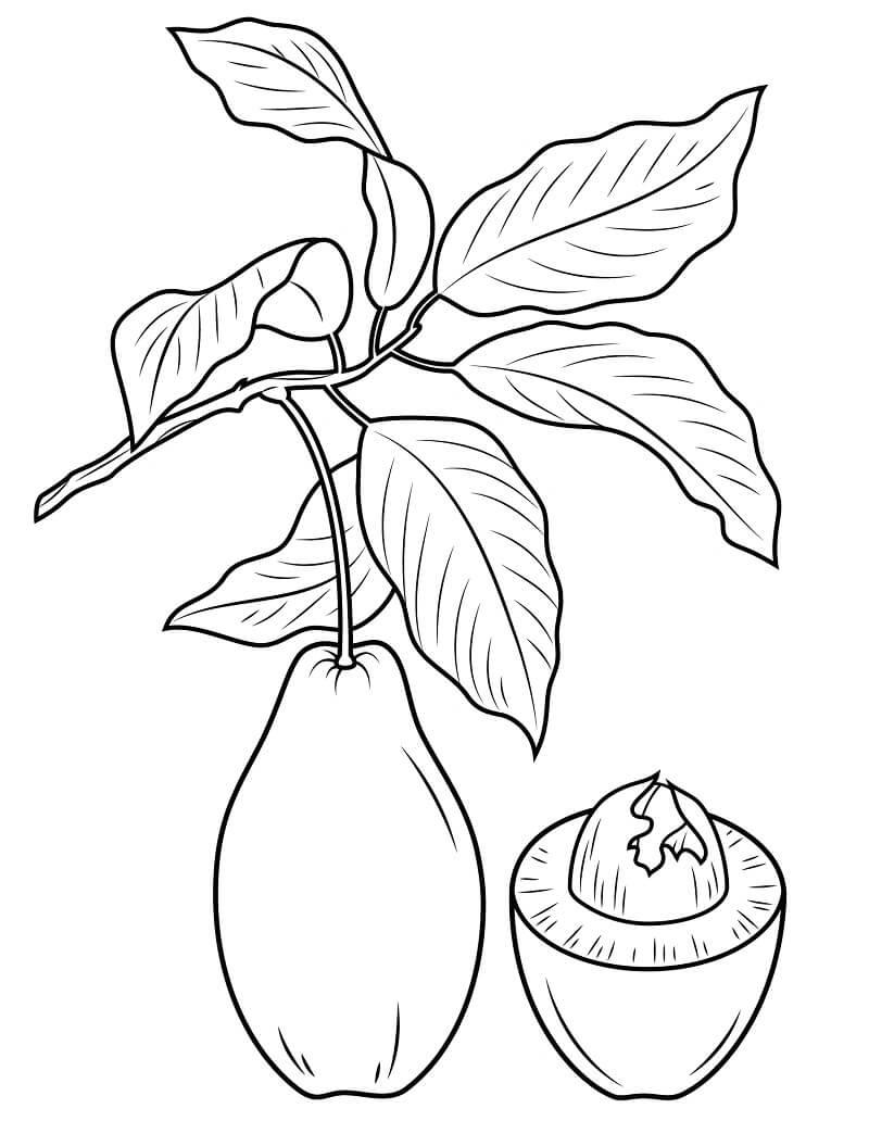 Раскраска Авокадо 18