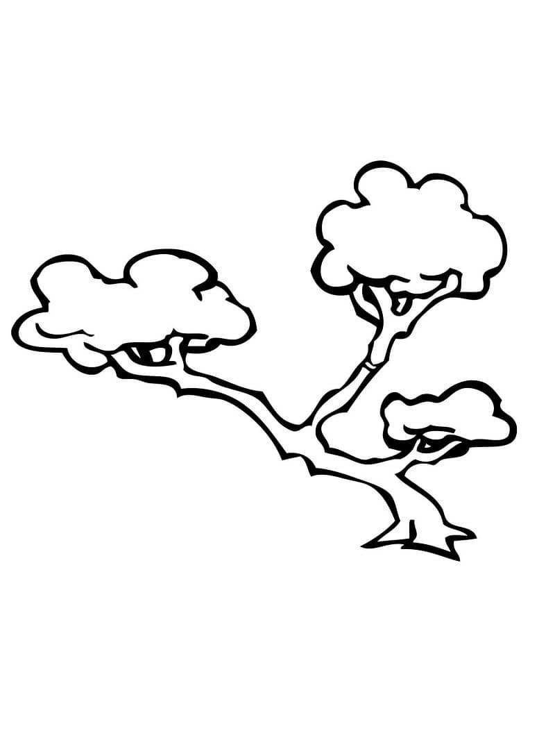 Раскраска бонсай дерево 1