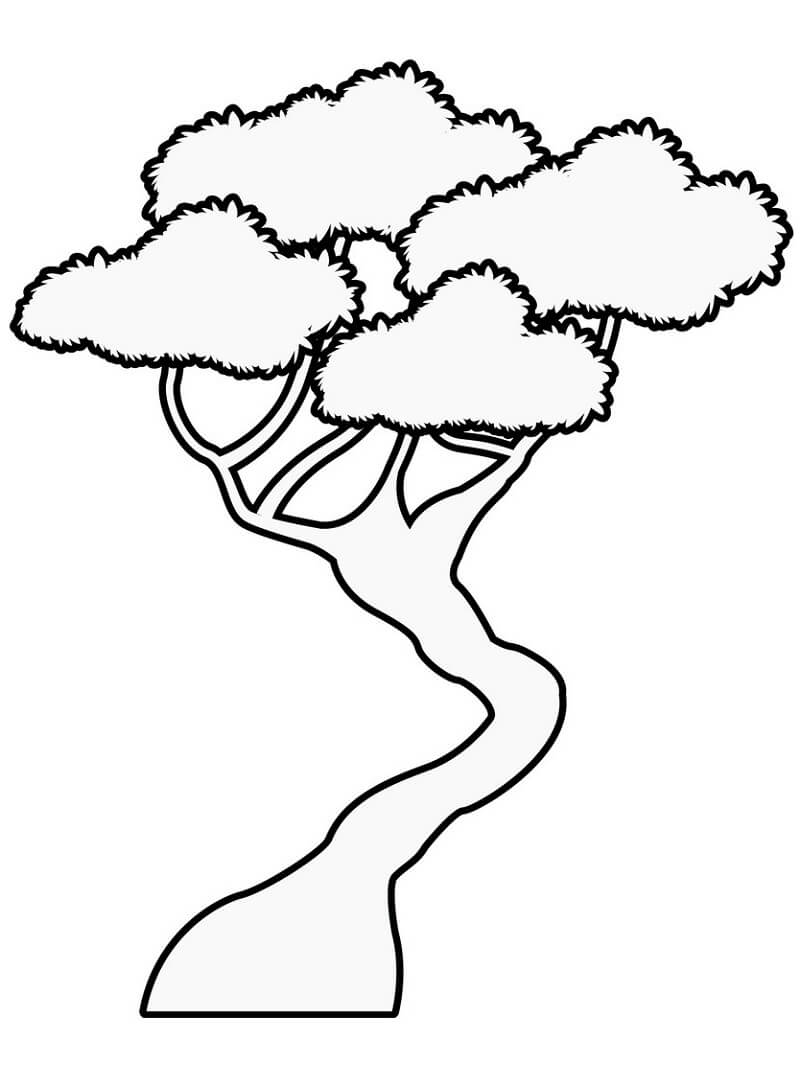 Раскраска бонсай дерево 2