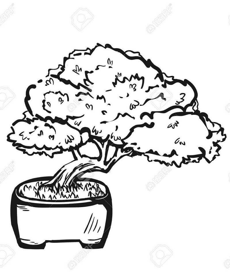 Раскраска бонсай дерево
