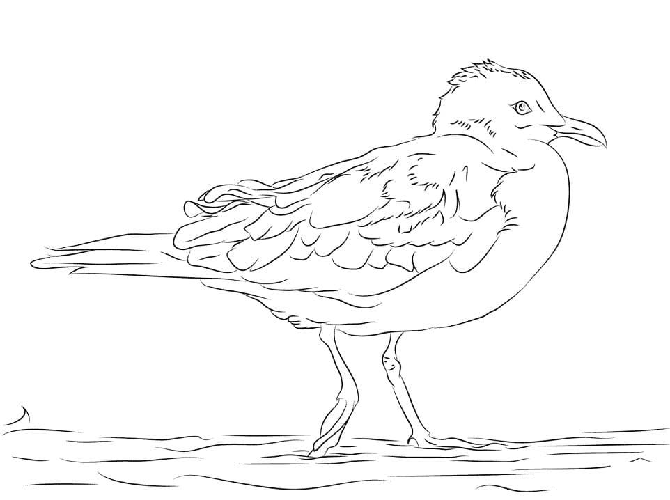 Раскраска Чайка 1