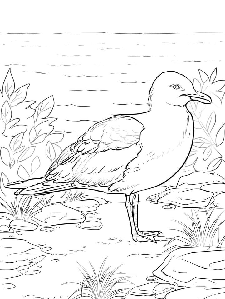 Раскраска Чайка 2