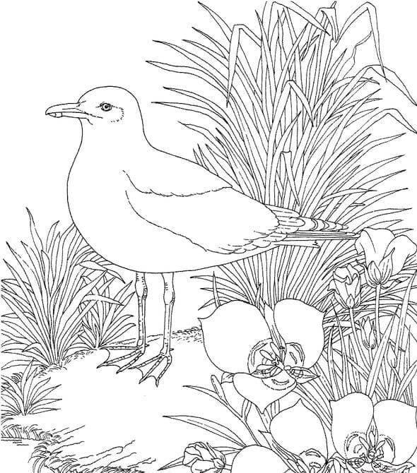 Раскраска Чайка 8
