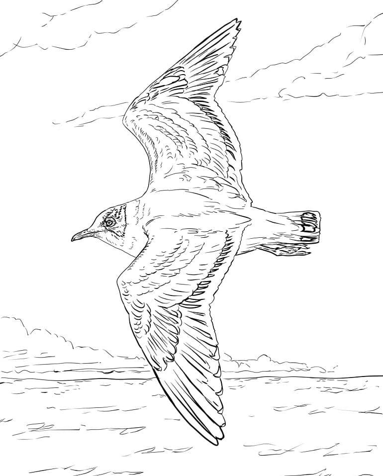 Раскраска чайка летит 1