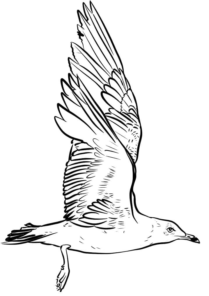 Раскраска чайка летит 2