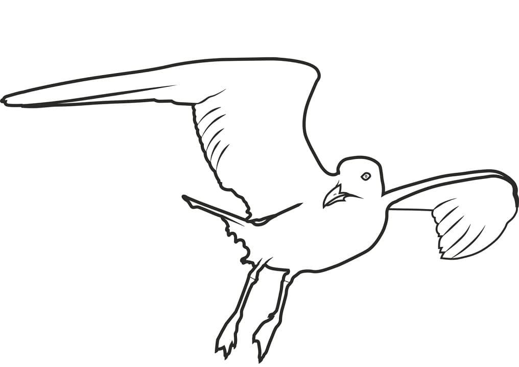 Раскраска чайка летит 4