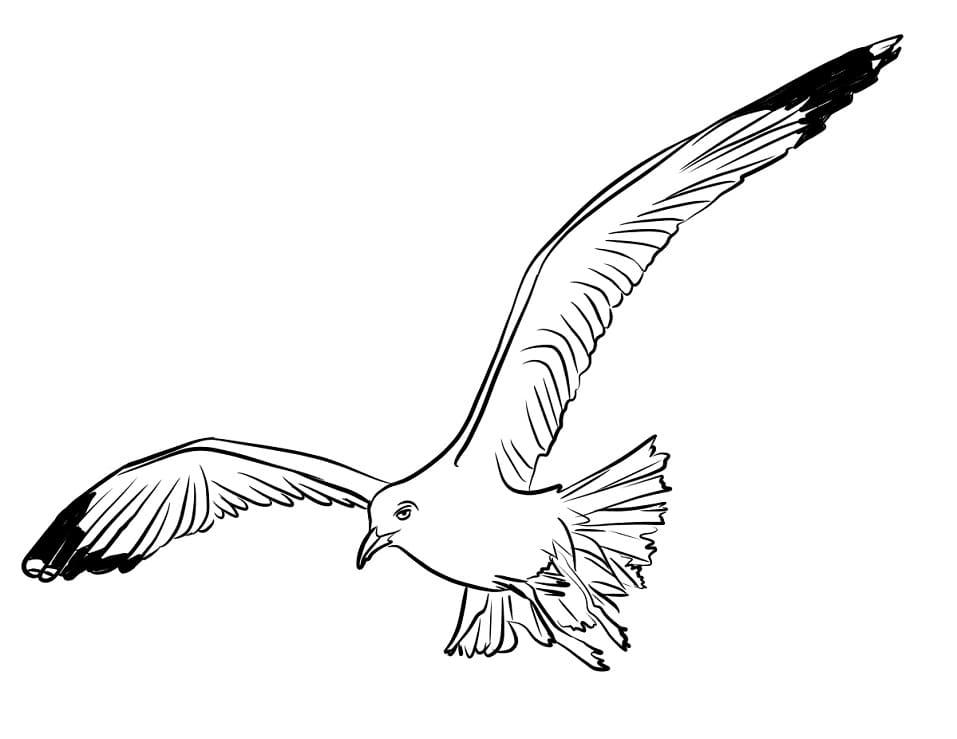 Раскраска чайка летит 5