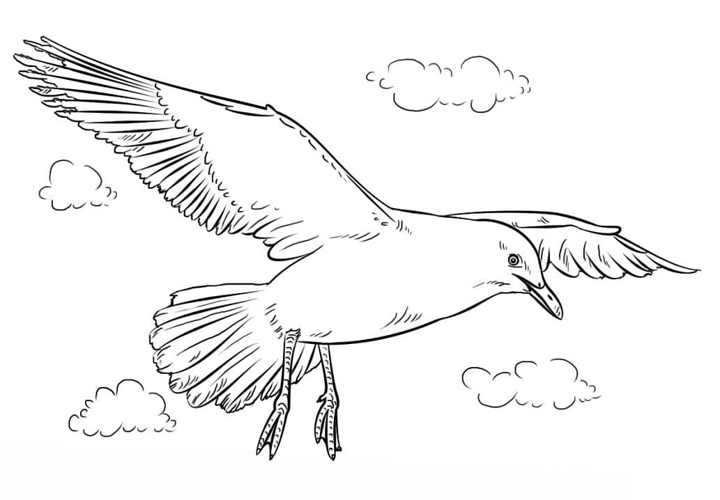 Раскраска чайка летит
