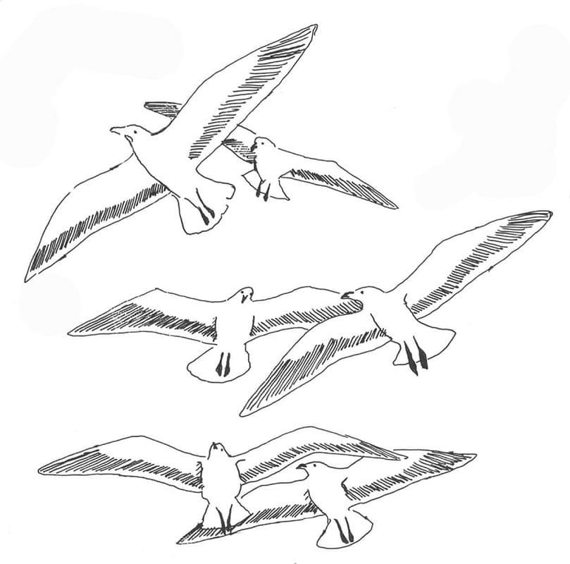 Раскраска чайки летают