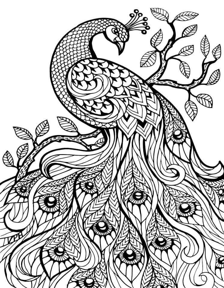 Раскраска чудесный павлин 1