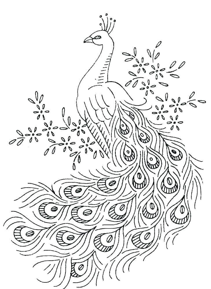 Раскраска чудесный павлин 3