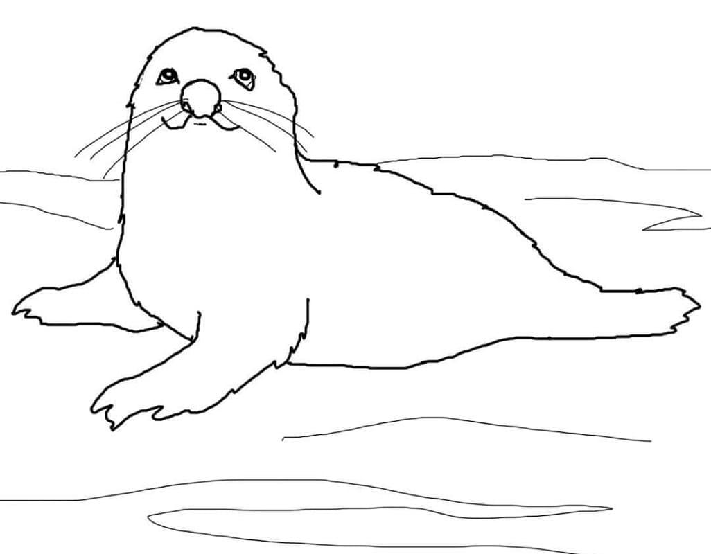 Раскраска Детёныш гренландского тюленя