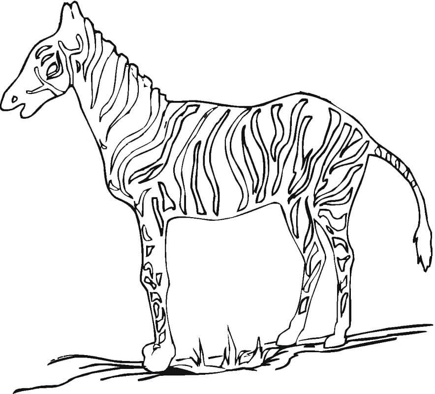 Раскраска дикая зебра 10