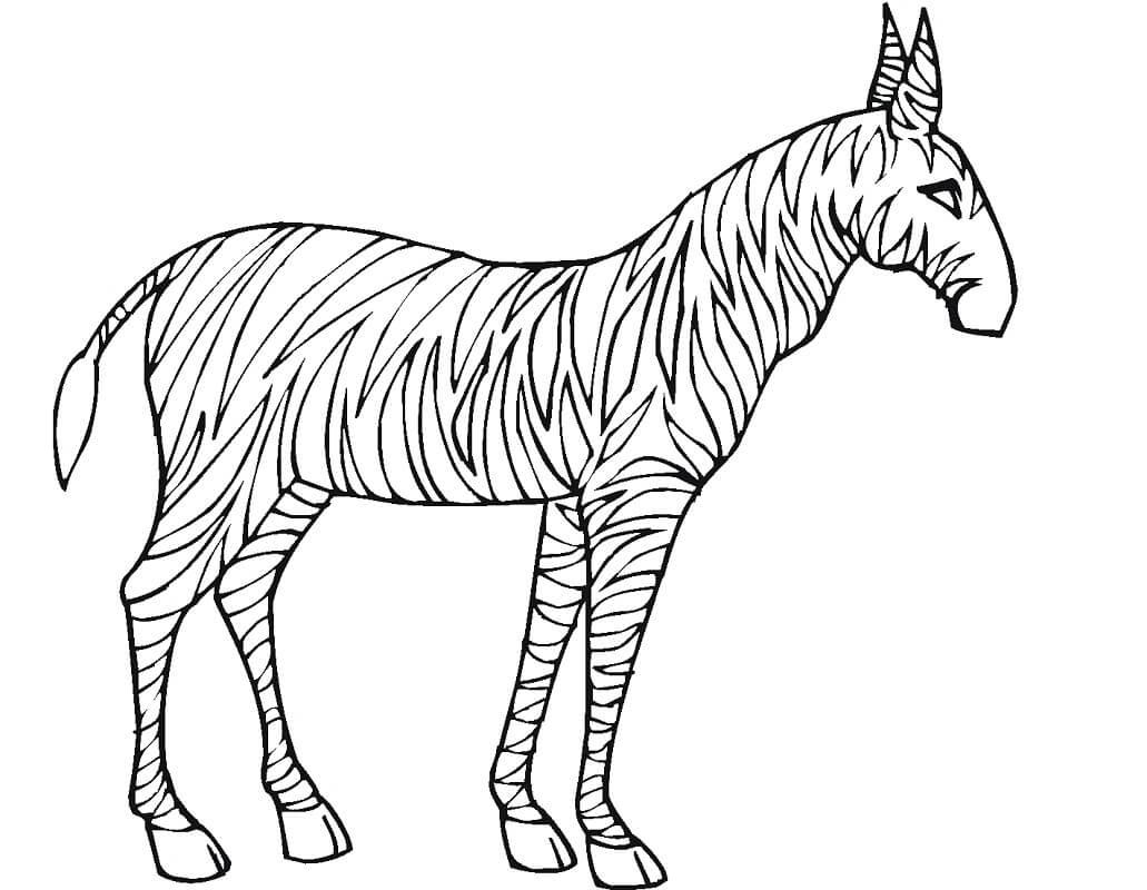 Раскраска дикая зебра 11
