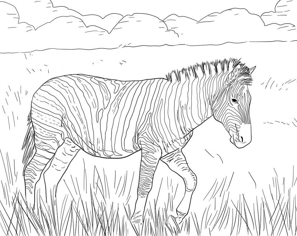 Раскраска дикая зебра 4