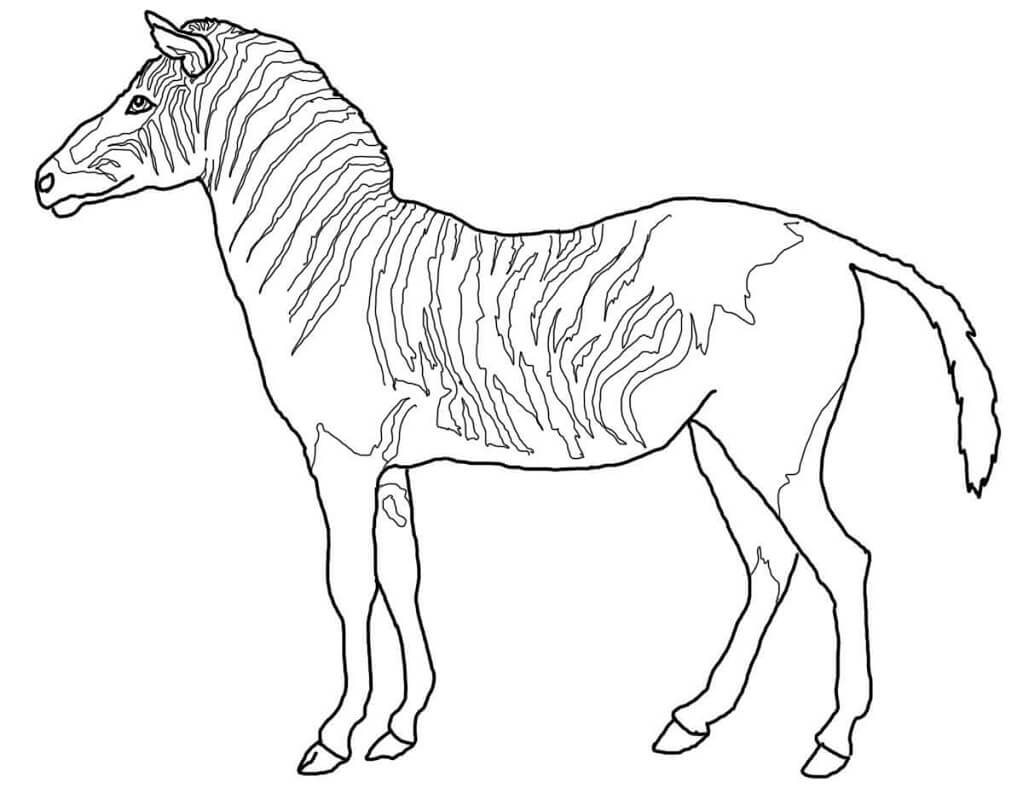 Раскраска дикая зебра 6